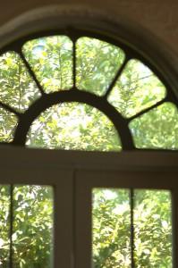 窓からの緑(過去撮影)